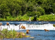 Alaska Bear Viewing at Brooks Falls