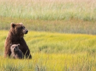 Alaska Bear Viewing