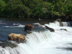 Alaska Bear Viewing Tour: Brooks Falls in Katmai National Park