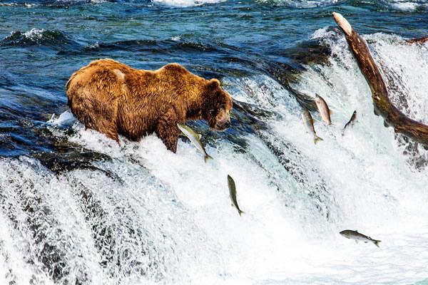 Alaska Trips & Tours